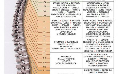 Spinal Nerve Function